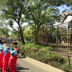 動物園きりん